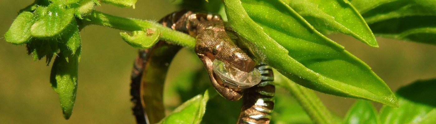 DNA-snake-engagement-ring-5