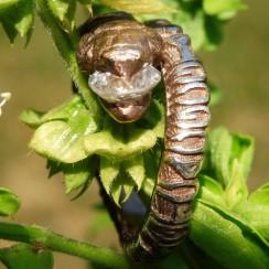 DNA-snake-engagement-ring-6