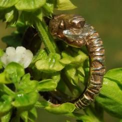 DNA-snake-engagement-ring-8